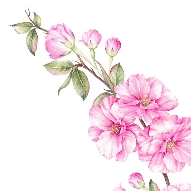Cadre de printemps de sakura bluming. Photo Premium