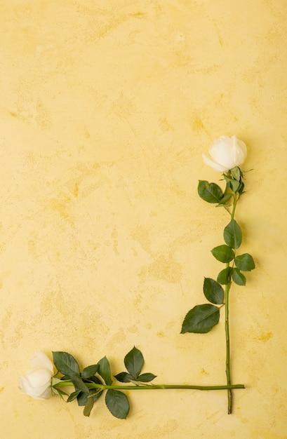 Cadre de roses blanches naturelles avec espace de copie Photo gratuit