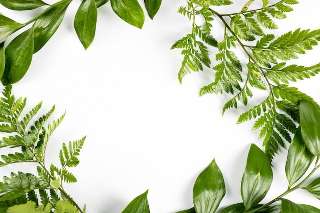 Cadre Vert Avec Des Branches Et Des Feuilles Sur Fond Blanc. Mise à Plat, Vue De Dessus, Fond. Photo Premium