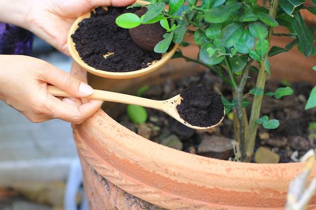 Café Moulu, Le Résidu De Café Est Appliqué à L'arbre Et Est Un Engrais Naturel, Passe-temps De Jardinage Photo Premium