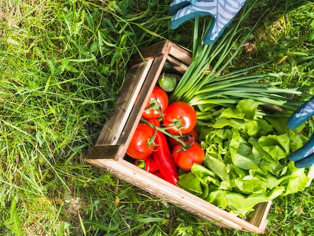 Caisse en bois avec des légumes biologiques frais sur l'herbe verte Photo gratuit
