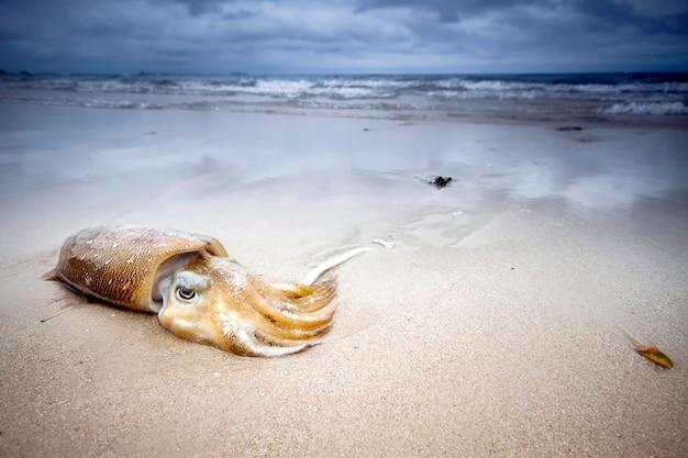 Calmar se trouve sur la plage dans le sable ciel nuageux Photo Premium