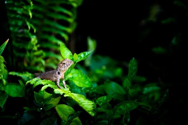 Caméléon sur arbre avec projecteur, concept de nature sauvage Photo Premium