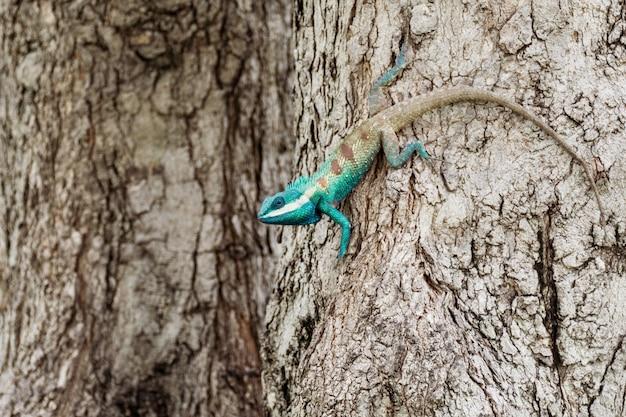 Caméléon bleu en zone tropicale sur l'arbre Photo Premium