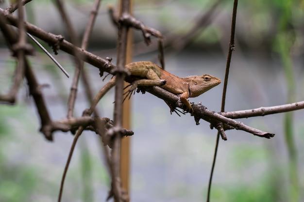 Caméléon marron sur les branches Photo Premium