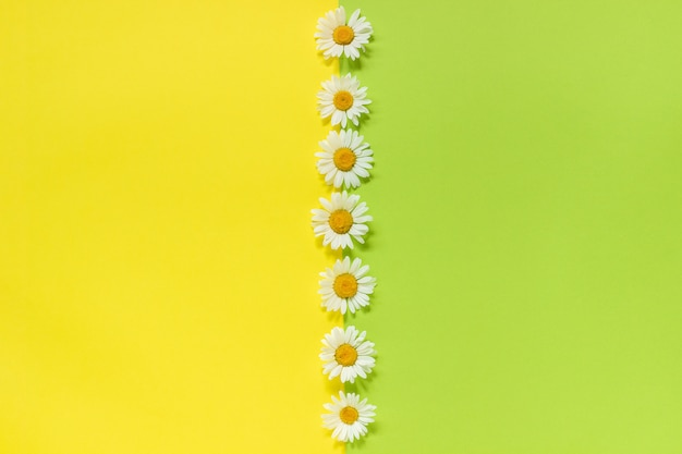 Camomille ligne verticale fleurs de marguerites Photo Premium