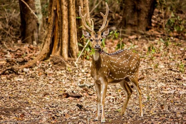 Camouflé dans une forêt Photo Premium