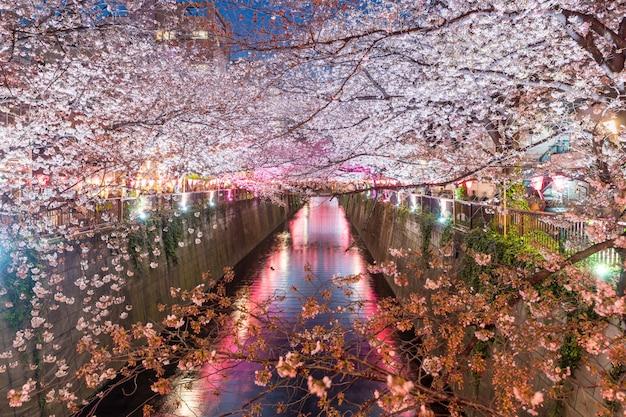 Canal de meguro bordé de cerisiers en fleurs la nuit à tokyo Photo Premium