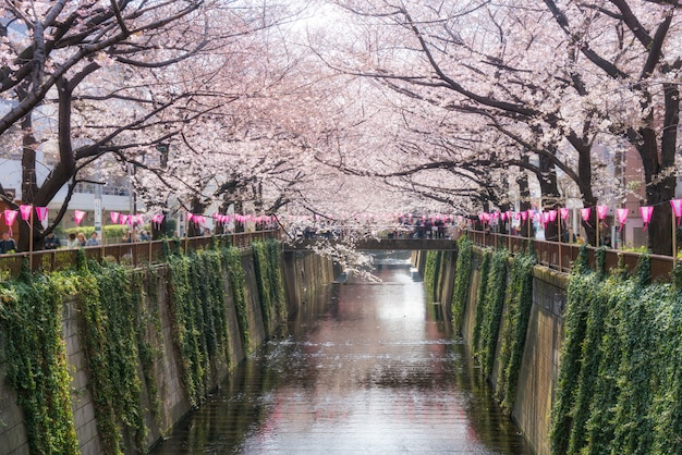 Canal meguro bordé de fleurs de cerisier à tokyo, au japon. printemps en avril à tokyo, au japon. Photo Premium
