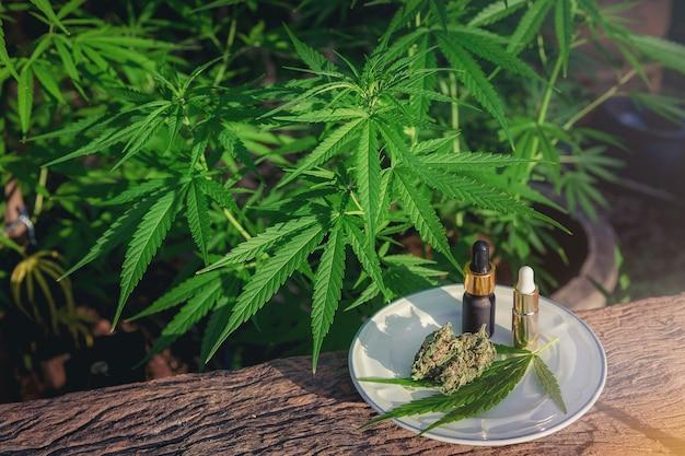 Cannabis Médical Marijuana Sur Table En Bois Avec Un Extrait D'huile Essentielle, Des Boutons Floraux Et Des Feuilles. Photo Premium
