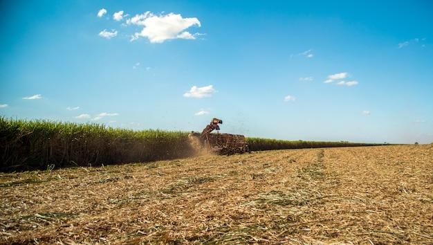 Canne à Sucre Hasvest Plantation Photo Premium