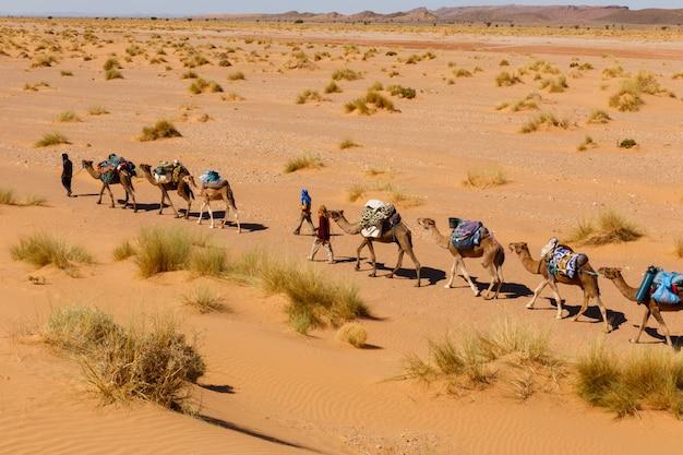 Caravane de chameaux dans le désert du sahara Photo Premium
