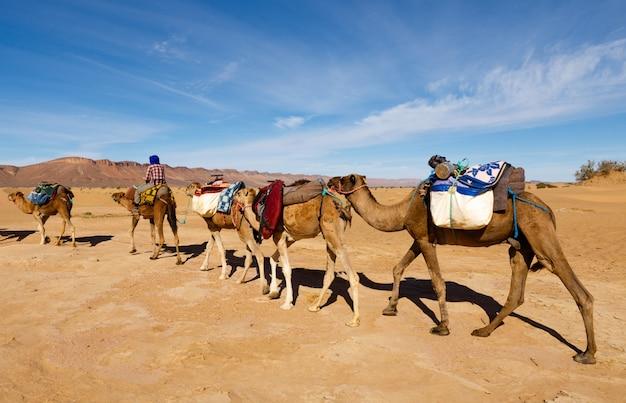 Caravane de chameaux traversant le désert Photo Premium