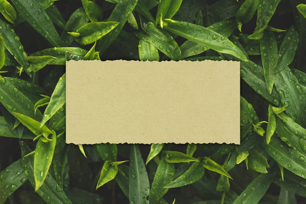 Carte Papier Sur Fond De Feuilles Vertes Humides Copie Espace. Photo Premium
