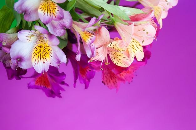 Carte de voeux avec des fleurs. bannière avec des fleurs d'alstroemeria sur un fond de néon. Photo Premium