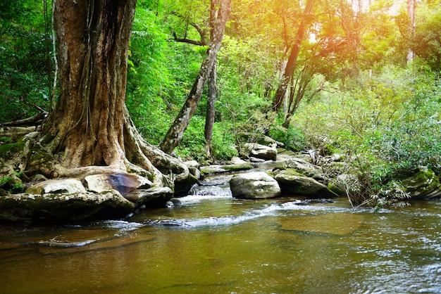 Cascade fond naturel merveilles thailand rivière ruisseau dans la forêt Photo Premium