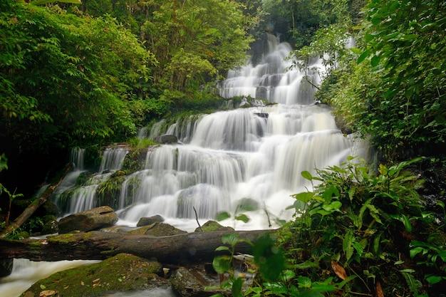 Cascade en forêt Photo Premium