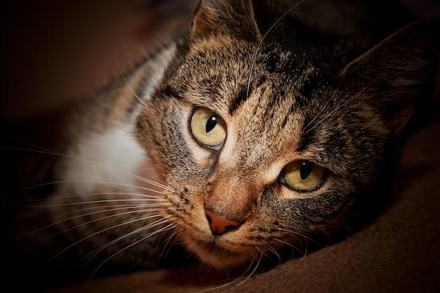 Cat couché Photo gratuit