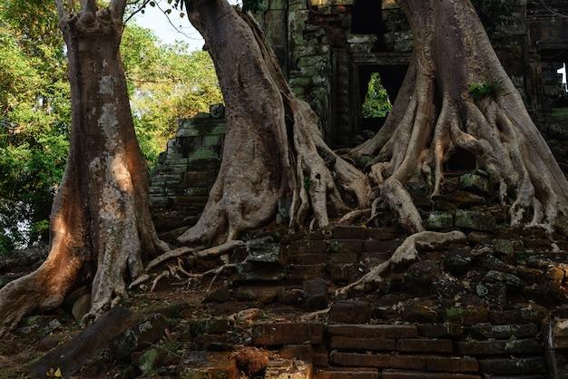 Les célèbres arbres de la jungle ta prohm embrassant les temples d'angkor, vengeance de la nature contre des bâtiments humains, destination de voyage au cambodge. Photo Premium