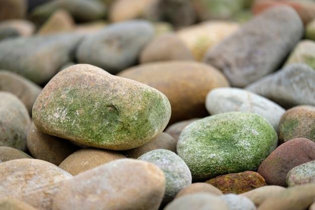 Cercle de roches avec des spores vertes Photo Premium