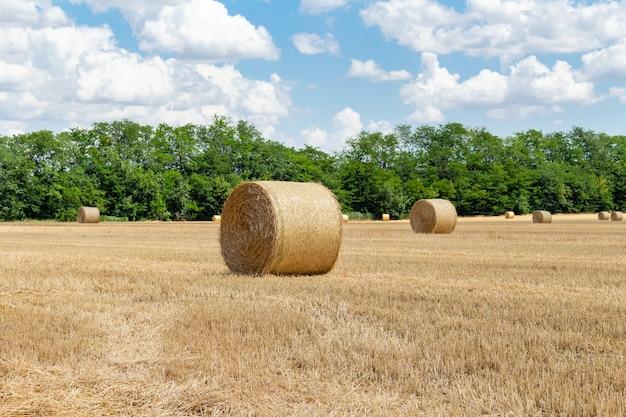 Céréales Récoltées Blé Orge Champ De Grains De Seigle, Avec Des Meules De Foin Balles De Paille Piquets De Forme Ronde Photo Premium