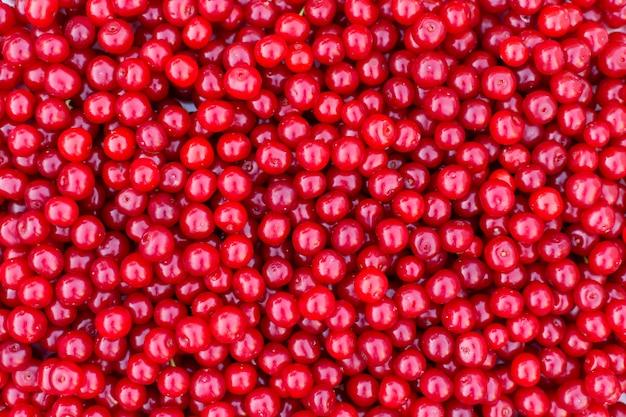 Cerises rouges fraîches, texture de fond de fruits d'été. Photo Premium