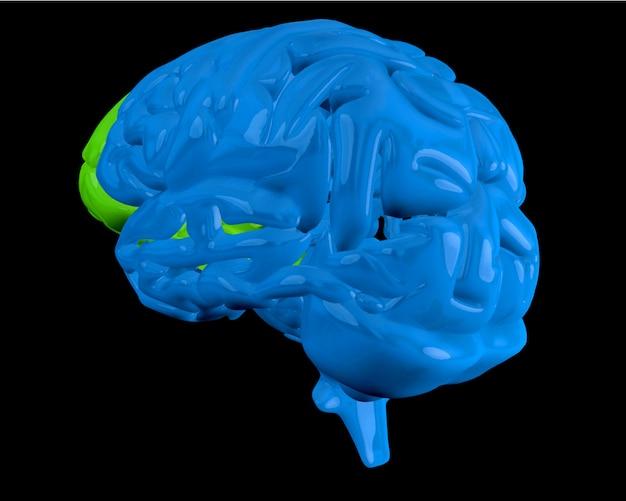 Cerveau bleu avec lobe frontal en surbrillance Photo Premium