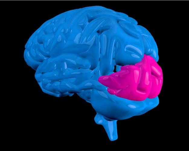 Cerveau bleu avec lobe occipital surligné Photo Premium