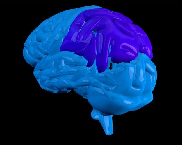 Cerveau bleu avec lobe pariétal en surbrillance Photo Premium