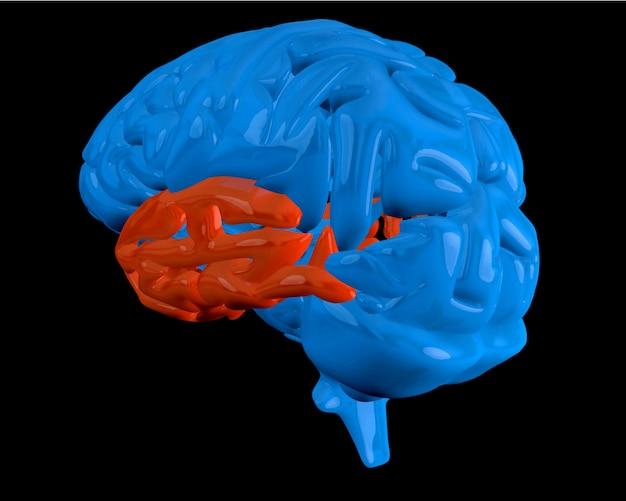 Cerveau bleu avec lobe temporal en surbrillance Photo Premium