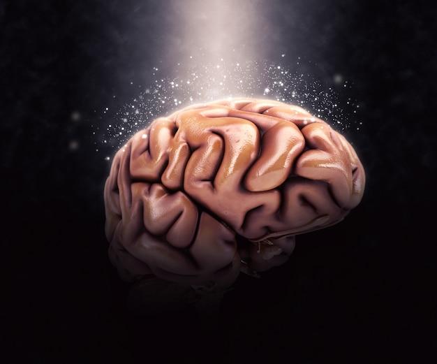 Cerveau Humain Photo gratuit