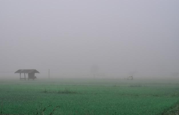 Chalet dans la rizière et brouillard en hiver. chiang mai, thaïlande Photo Premium
