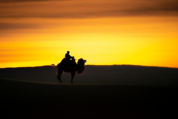 Chameau Traversant Les Dunes De Sable Au Lever Du Soleil, Désert De Gobi En Mongolie. Photo Premium