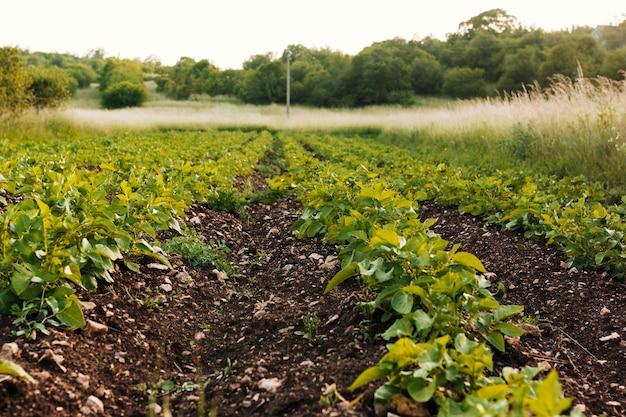 Champ agricole à long coup Photo gratuit