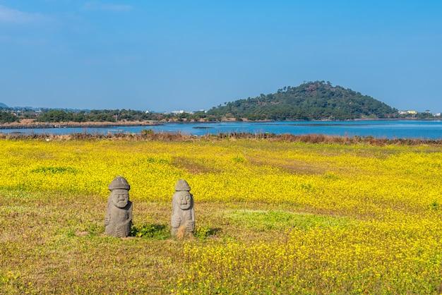 Champ de canola à seongsan ilchulbong, île de jeju, corée du sud. Photo Premium