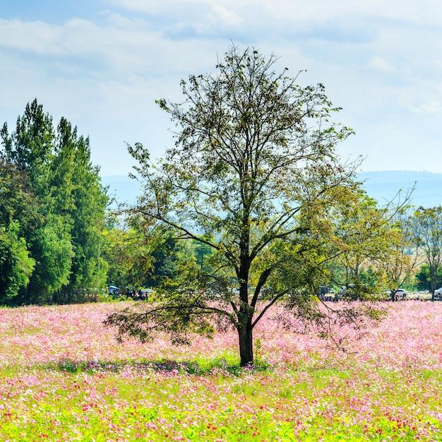 Champ de fleur cosmos avec arbres et ciel nuageux Photo Premium