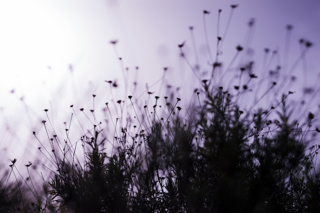 Champ de fleurs au coucher du soleil Photo gratuit