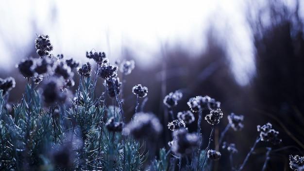 Champ de fleurs au printemps Photo gratuit