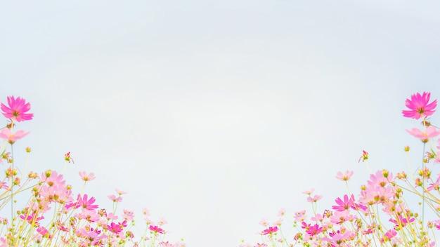 Champ de fleurs de cosmos sur fond de ciel bleu Photo Premium