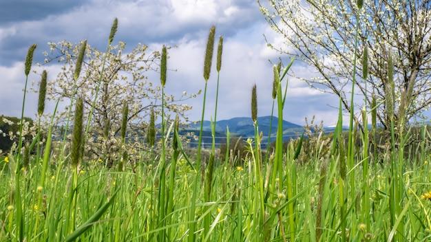 Champ de fleurs d'herbe Photo Premium