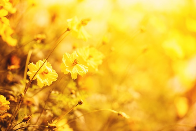 Champ de fleurs nature jaune flou fond automne calendula plante jaune Photo Premium
