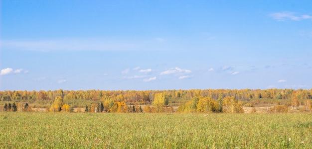 Champ Et Forêt Jaune D'automne. Ciel Bleu Avec Des Nuages Sur La Forêt. La Beauté De La Nature En Automne. Photo Premium
