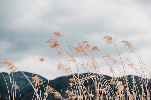 Champ d'herbe haute en automne, japon Photo gratuit