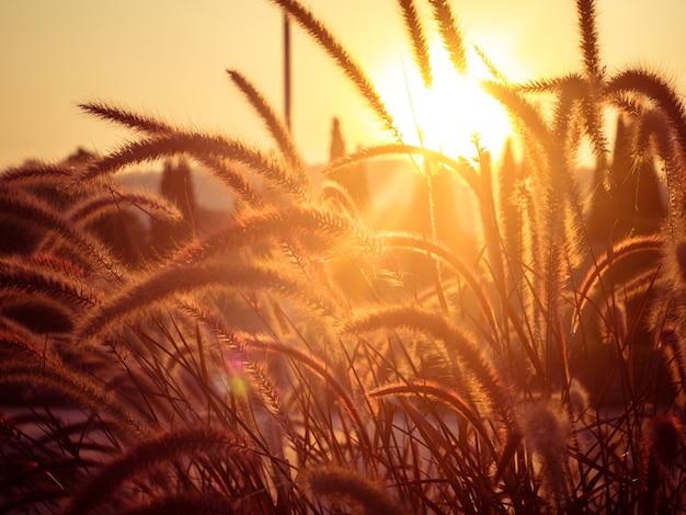 Champ d'herbe pendant le coucher du soleil Photo Premium