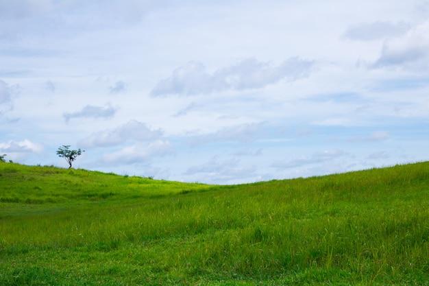 Champ d'herbe verte et ciel bleu Photo Premium
