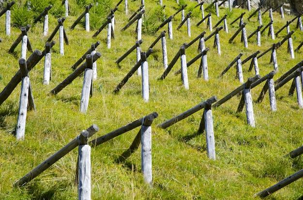 Champ D'herbe Verte Avec Des Poteaux En Bois En Forme De Pyramide Photo gratuit