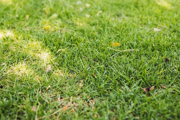 Champ d'herbe verte Photo gratuit