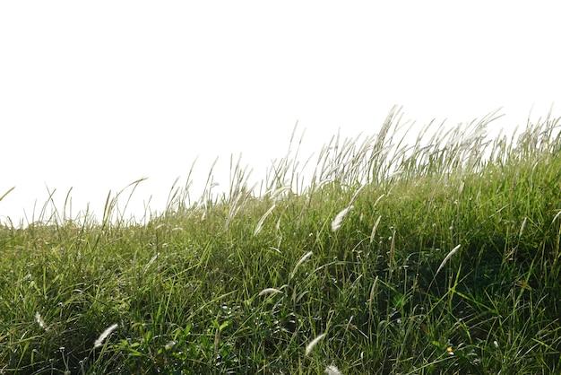 Champ d'herbe Photo gratuit
