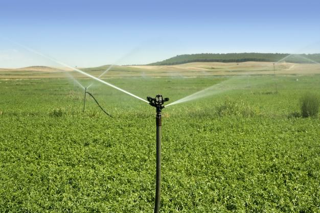 Champ de légumes d'irrigation avec arroseur Photo Premium