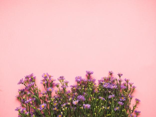 Un champ de petites fleurs bleues sur fond rose Photo Premium